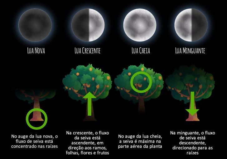 fases_da_lua
